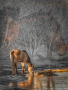 Spirits of Cold Creek