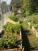 gardenproduce