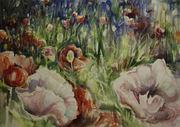 North Saanich Poppies