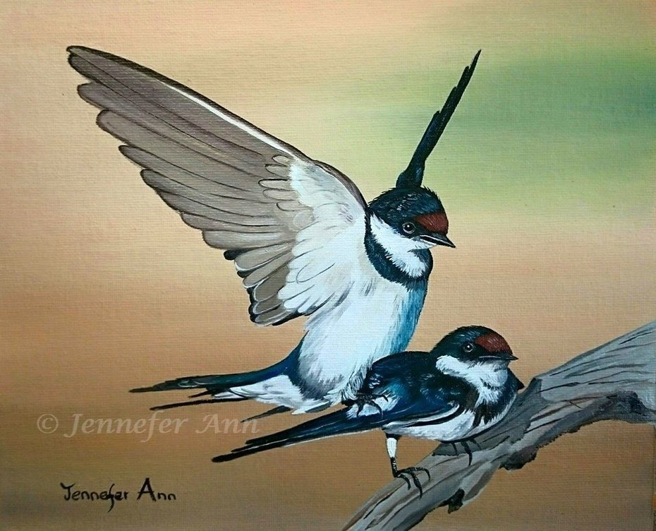 Love is in the air (White Throated Swallows)