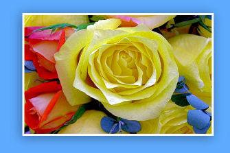 Wonderful Flowers!