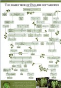english hop family tree
