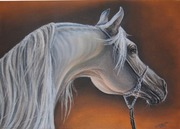 pastel, koń gr na prof