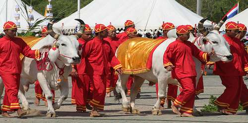 why-are-white-cows-sacred-holy-hindus-india-banner