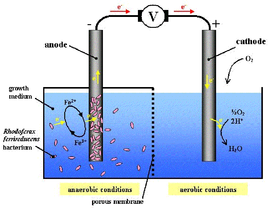 ...Celda de Combustible Microbiana...