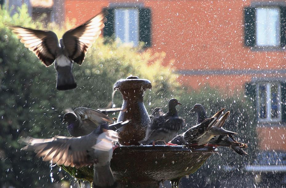 tutti in fontana