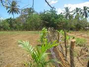 Edgewater, Nicaragua 403