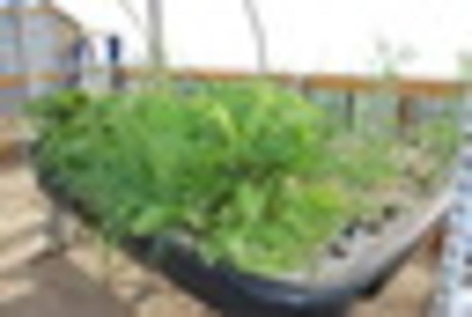Beets 5 weeks radishes 2 weeks