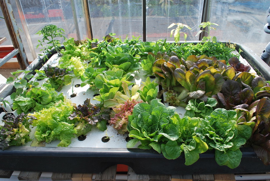 Salad bar 8 weeks
