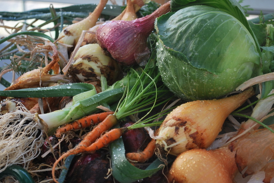 root crops and cabbage.