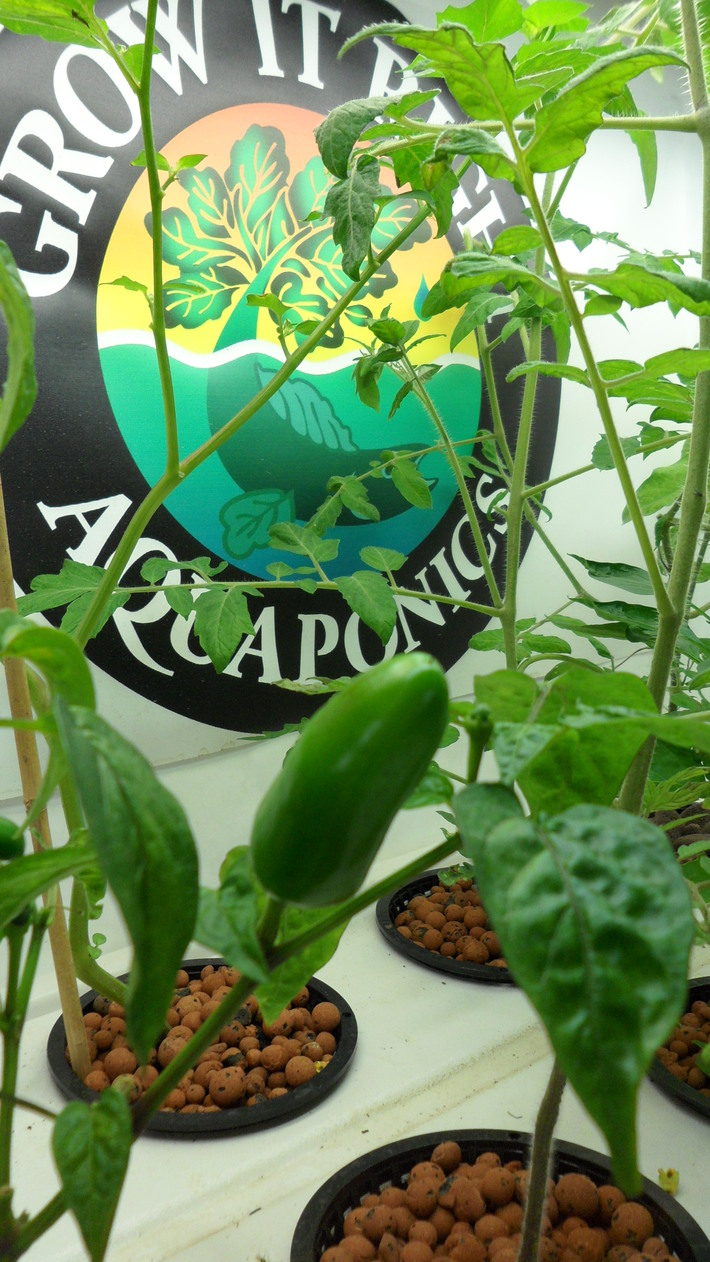 peppers and logo