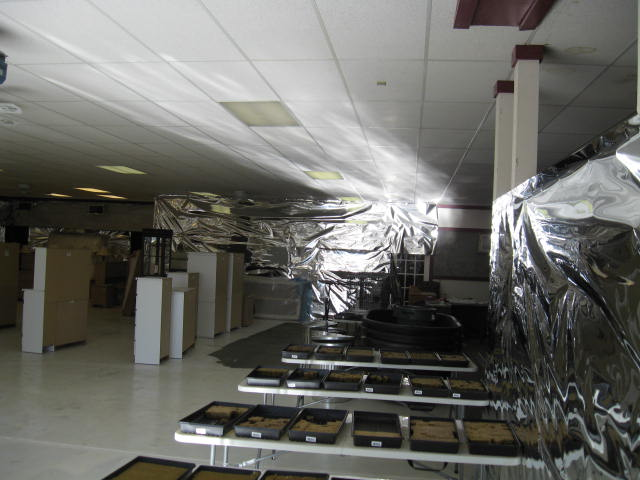 Aquaponics Mylar Lighting lighting the ceiling and wall 50 foot away.