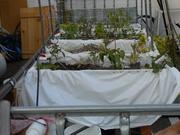 Four distinct types of grow beds.