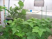 String beans & Eggplant