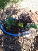 Arlanza community garden pond update..