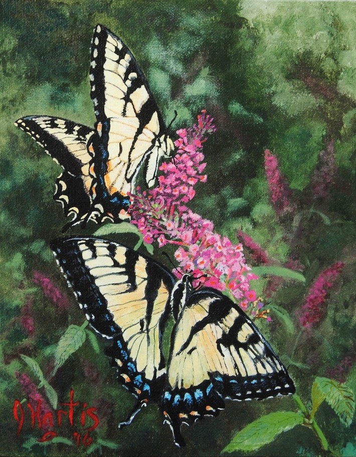 TWO WEEKS OF BEAUTY [EASTERN SWALLOWTAIL] 8X10 (ACRYLIC)