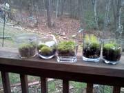 Moss Terrarrium ByLightOfMoon Etsy