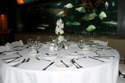 Orchids submerged at the Aquarium