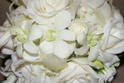 close up of shades of white