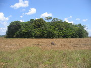 Amerindian Forest Island, Takama Savannas, Guyana