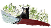 Bear Car_Painting