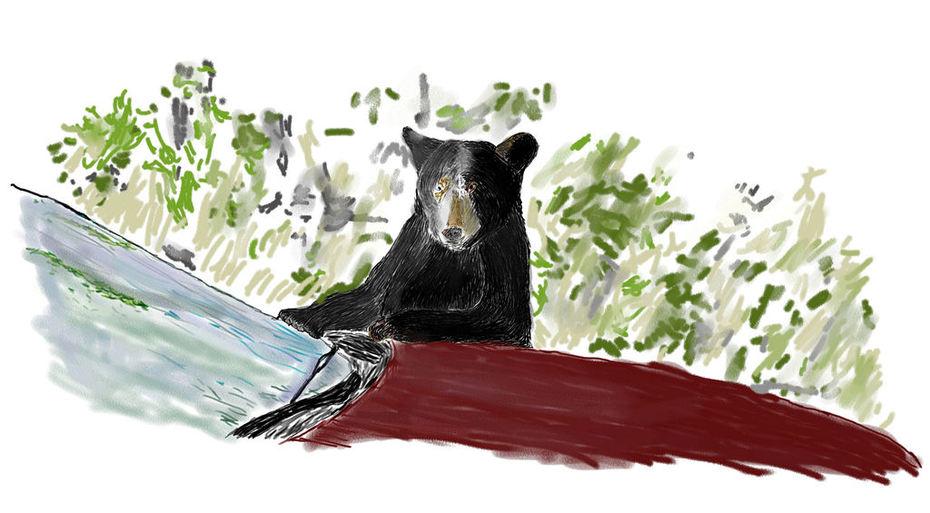 Bear Car_Painting