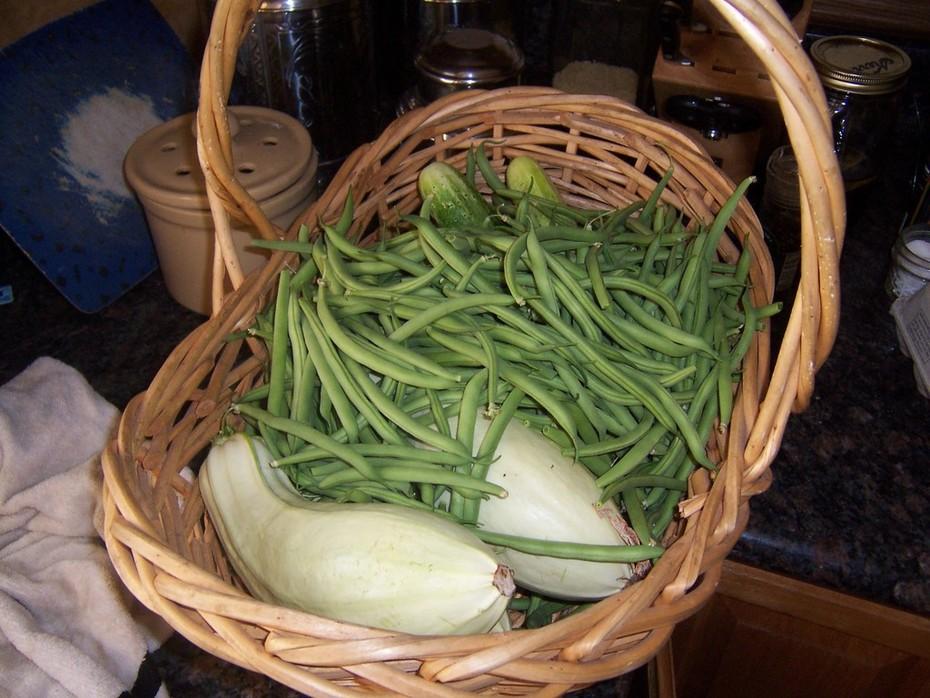 green beans and Franken-squash
