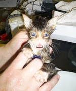 Kirin's first bath  :)