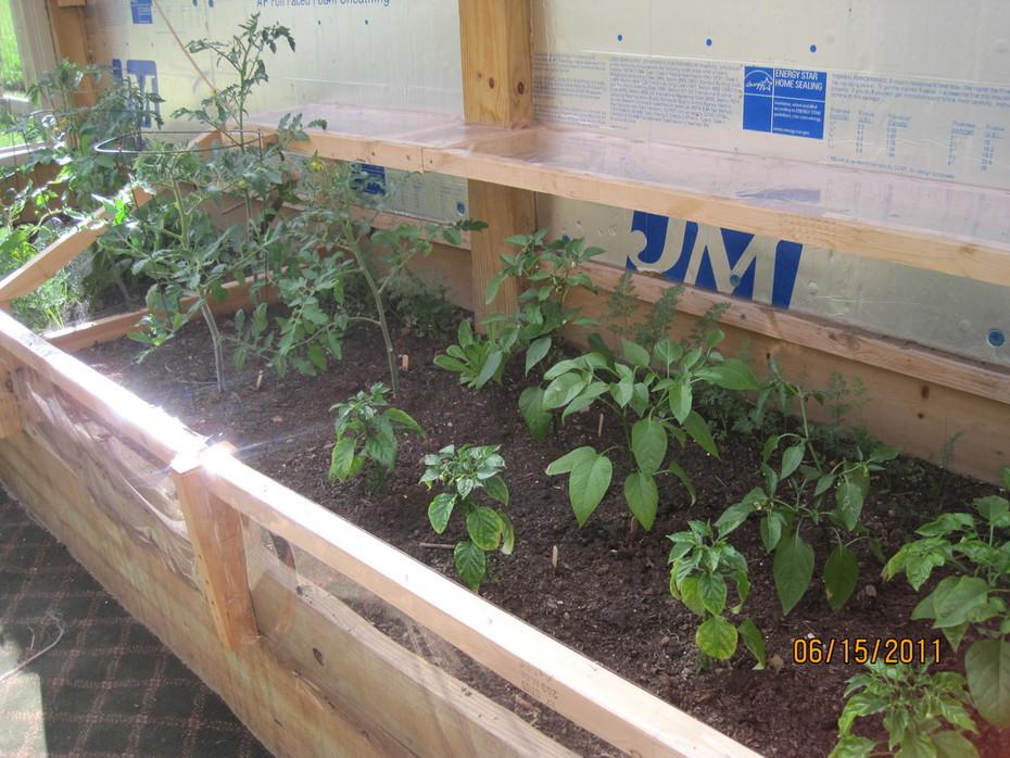 jalapeno, habanero, sioux tomato