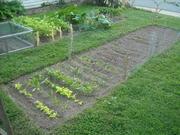 Winter Garden Plot - 9/12/12