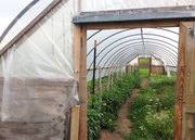 New Entry Open Farms Tour: Greenhouse
