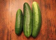 First Cucumber Harvest