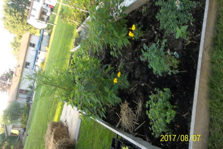 Herbs and Marigolds