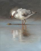 ChuckS_seagull
