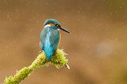 kingfisher_resource2