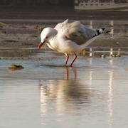 resource_seagull8