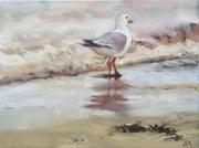 Seagull in Ireland
