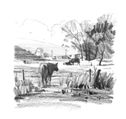 Ruakaka Farm Sketch