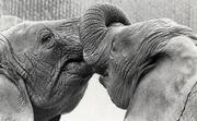 A friendly stare (London Zoo)