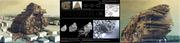 Generative Morphologies V4.0 - Agents Of Decay