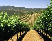 Vineyard, Lake County, California