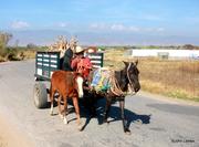 Wagon drawn cart - returning from market - Oaxaca, Mexico