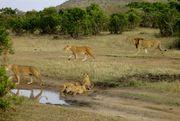 Tanzania safari holidays and kilimanjaro climb