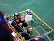 Ann travels the world-Great White Shark diving in Gansbaai, South Africa
