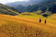 Terraced Field in Sapa, Vietnam