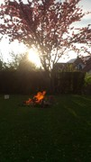 Sun Tree Fire