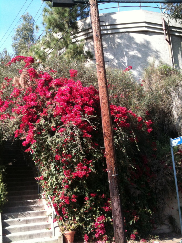 Secret Stairs: Secret Stairs: The entrance to Fellowship Park Park in Echo Park