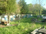 On the Left are the Birthing Pens