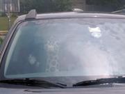 giraffe cake in the car.