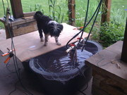 Dogs love aquaponics too!